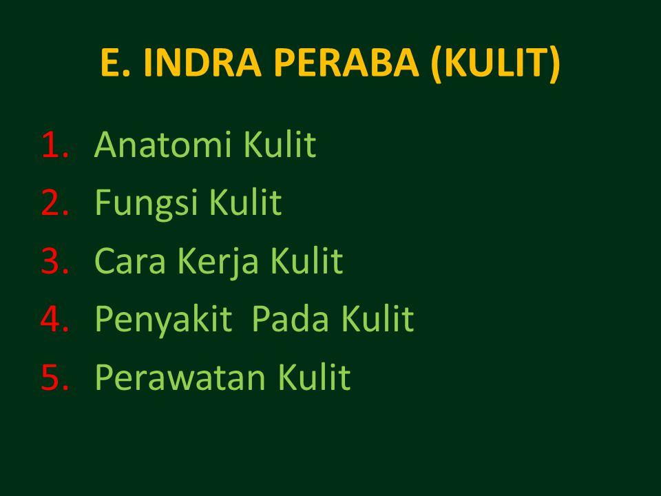 E. INDRA PERABA (KULIT) 1.Anatomi Kulit 2.Fungsi Kulit 3.Cara Kerja Kulit 4.Penyakit Pada Kulit 5.Perawatan Kulit