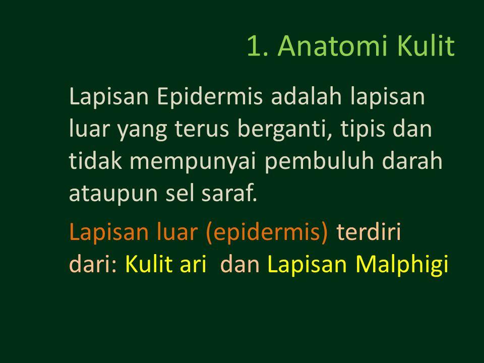 1. Anatomi Kulit Lapisan Epidermis adalah lapisan luar yang terus berganti, tipis dan tidak mempunyai pembuluh darah ataupun sel saraf. Lapisan luar (