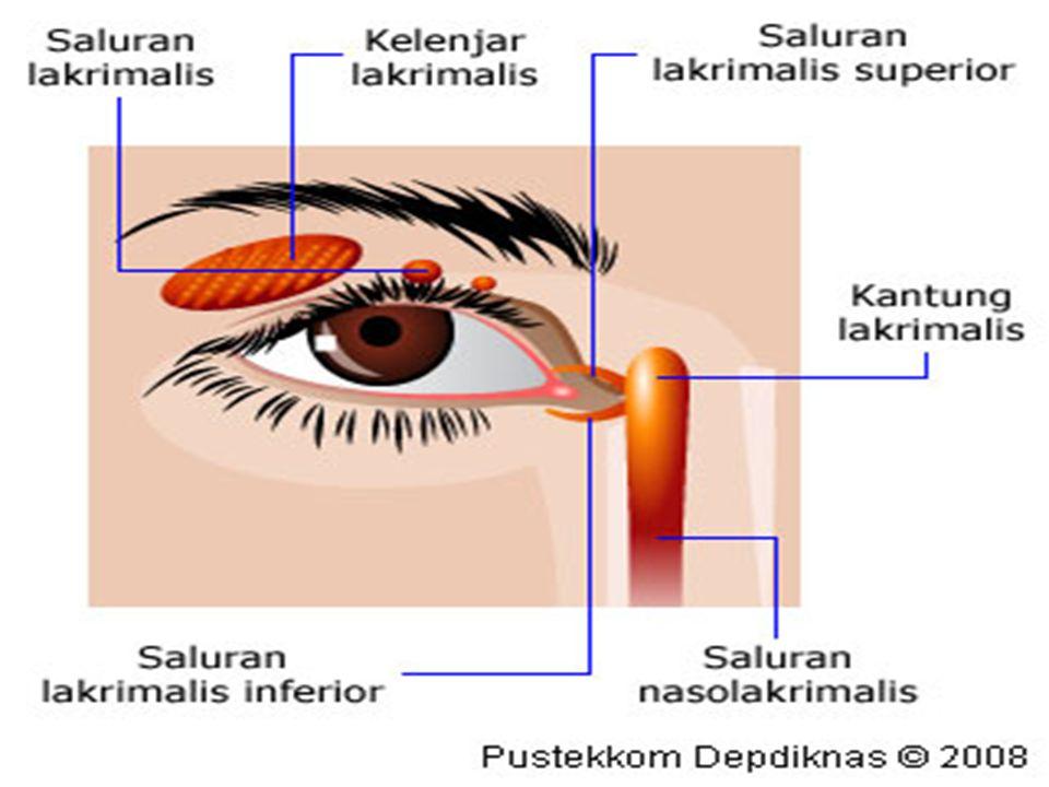3.Kelainan pada Hidung Kelainan pada hidung dinamakan ansomnia, yaitu ketidakmampuan hidung untuk mencium bau.