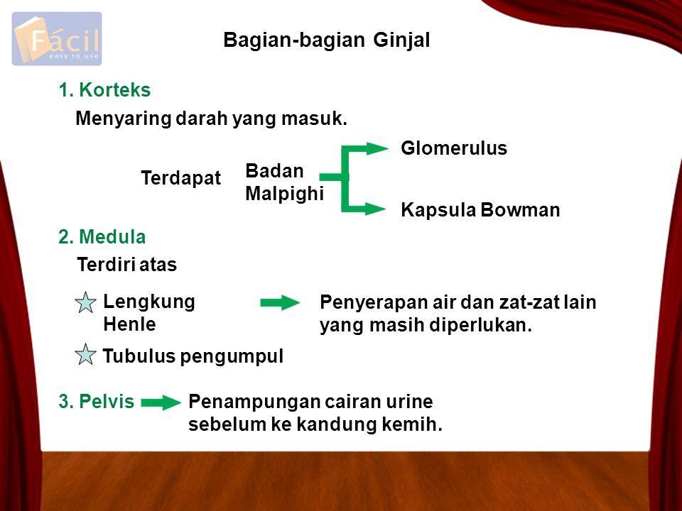 1. Korteks Badan Malpighi Glomerulus Kapsula Bowman Menyaring darah yang masuk. Bagian-bagian Ginjal 2. Medula 3. Pelvis Penampungan cairan urine sebe
