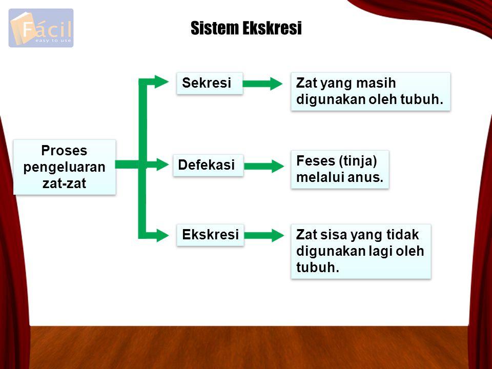 Proses pengeluaran zat-zat Proses pengeluaran zat-zat Defekasi Sekresi Ekskresi Sistem Ekskresi Feses (tinja) melalui anus. Feses (tinja) melalui anus