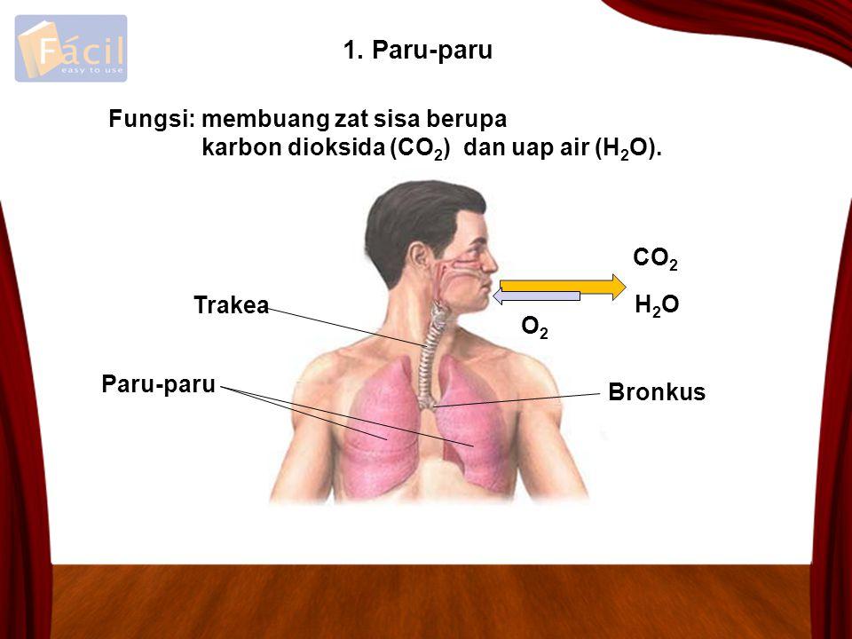 1. Paru-paru membuang zat sisa berupa karbon dioksida (CO 2 ) dan uap air (H 2 O). CO 2 H2OH2O O2O2 Paru-paru Trakea Bronkus Fungsi: