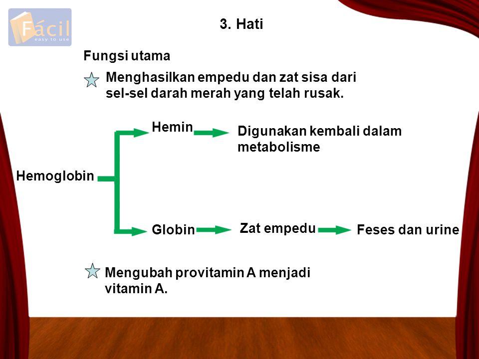 3. Hati Menghasilkan empedu dan zat sisa dari sel-sel darah merah yang telah rusak. Hemoglobin Hemin Globin Digunakan kembali dalam metabolisme Zat em