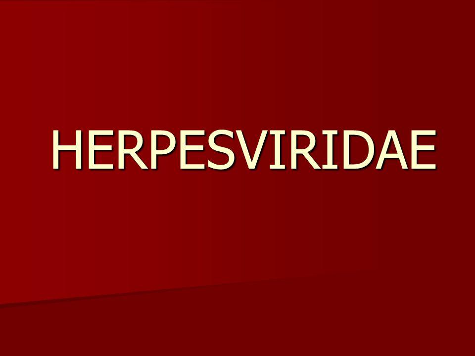 KARAKTERISTIK Herpesvirus merupakan virus DNA intranukleus besar.