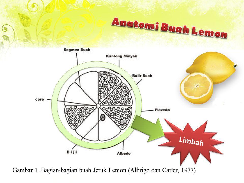 Pada Proses pengolahan sari buah lemon, sekitar 70% dari berat buah akan menjadi limbah Sifat asam kulit lemon dpt menurunkan pH tanah jika dibuang sehingga menurunkan tingkat kesuburan tanah Kandungan protein dan karbohidrat menyebabkan bau busuk Potensi Pemanfaatan