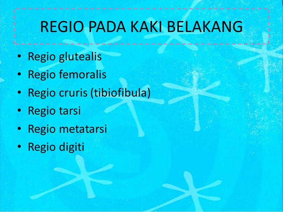 Regio glutealis Regio femoralis Regio cruris (tibiofibula) Regio tarsi Regio metatarsi Regio digiti REGIO PADA KAKI BELAKANG