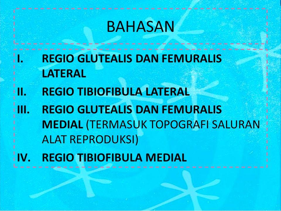 M.Tensor fascia latae Berbentuk segitiga, terletak craniolateral femur Origo: tuber coxae Insertio: fascia lata dan fascia femoris medialis Vascularisasi: A.circumflexa illiaca profunda dan A.circumflexa illiaca lateralis Fungsi: 1.