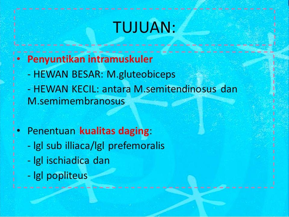 Nn.clunium merupakan buluh syaraf yang terbersit ke superficial dan turut IV dapat dijumpai pada permukaan profunda lgl menginervasi kulit, terdiri dari n.clunium cranial, medius dan caudal N.Cutaneus femoris lateralis berasal dari ramus ventralis n.lumbalis.