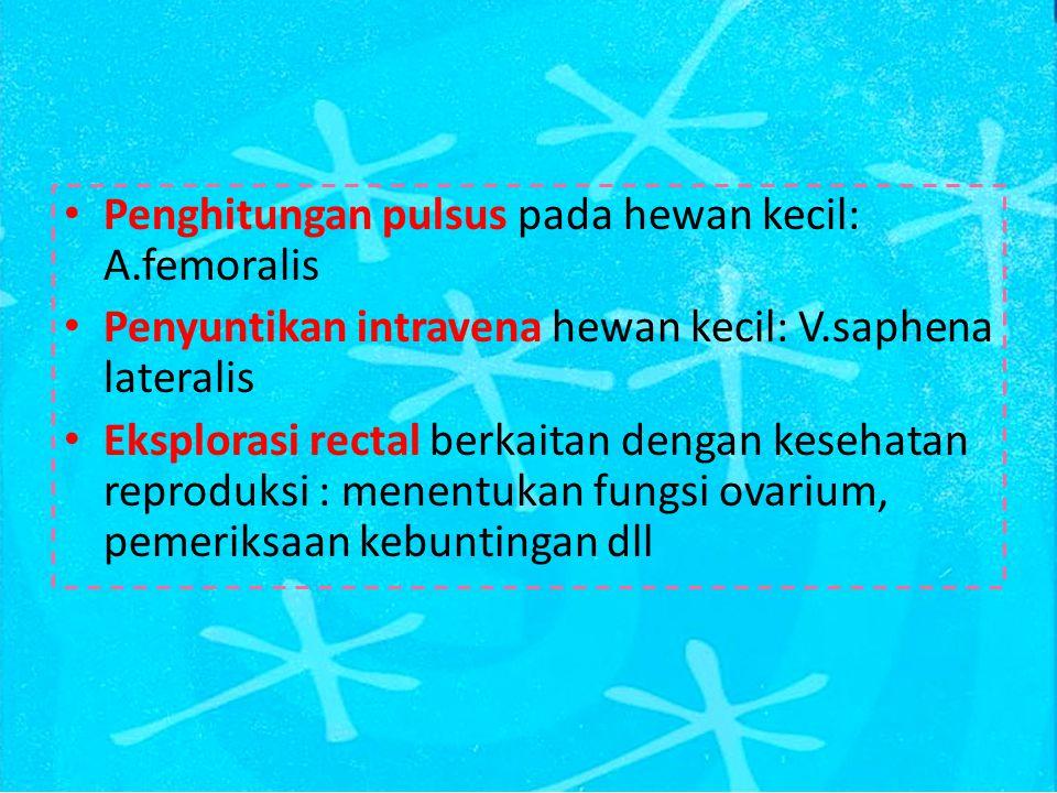 ARTERI PADA REGIO GLUTEALIS DAN FEMORALIS LATERAL A.circumflexa illiaca profunda Dicabangkan oleh A.iliaca externa dan di sekitar tuber coxae, diantara m.lumbales dan abdomen arteri ini akan bercabang menjadi ramus cranial dan ramus caudal Ramus cranial : mengarah ke cranial memvascularisasi m.