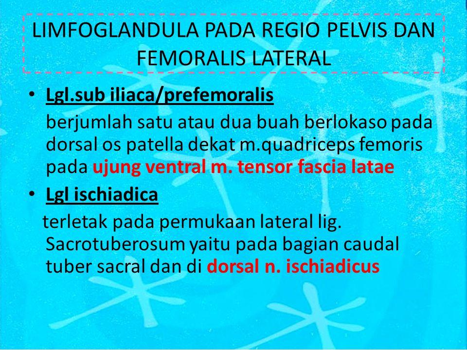 LIMFOGLANDULA PADA REGIO PELVIS DAN FEMORALIS LATERAL Lgl.sub iliaca/prefemoralis berjumlah satu atau dua buah berlokaso pada dorsal os patella dekat m.quadriceps femoris pada ujung ventral m.