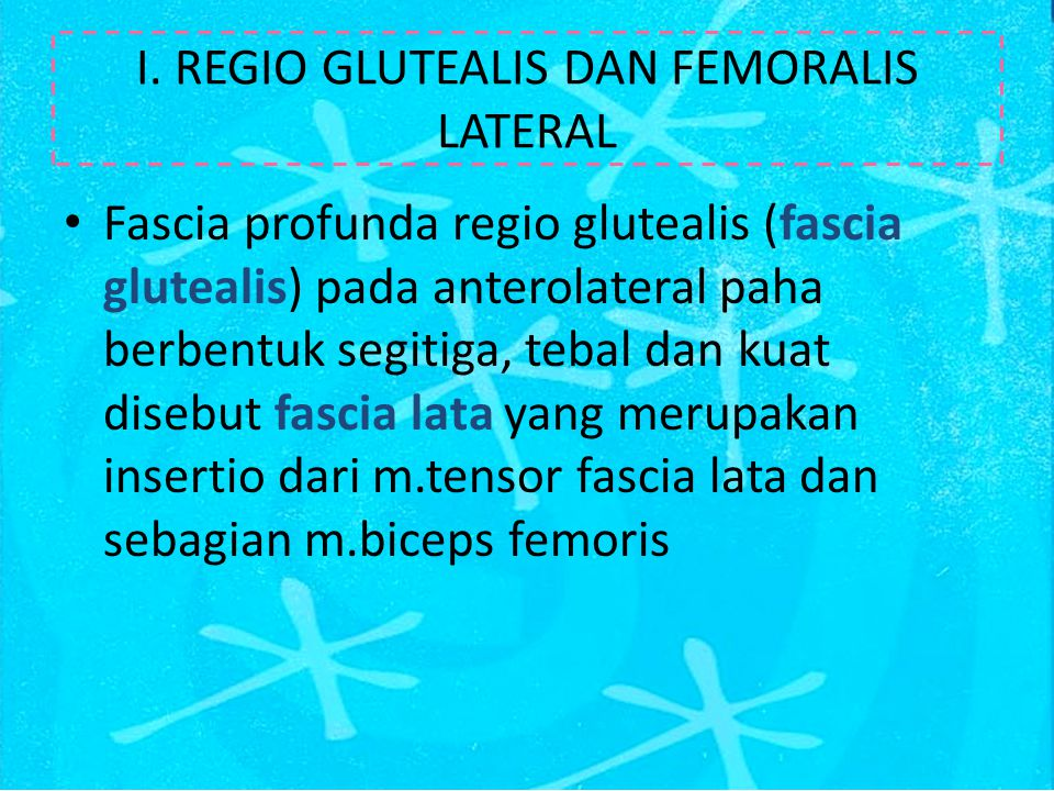 I. REGIO GLUTEALIS DAN FEMORALIS LATERAL Fascia profunda regio glutealis (fascia glutealis) pada anterolateral paha berbentuk segitiga, tebal dan kuat