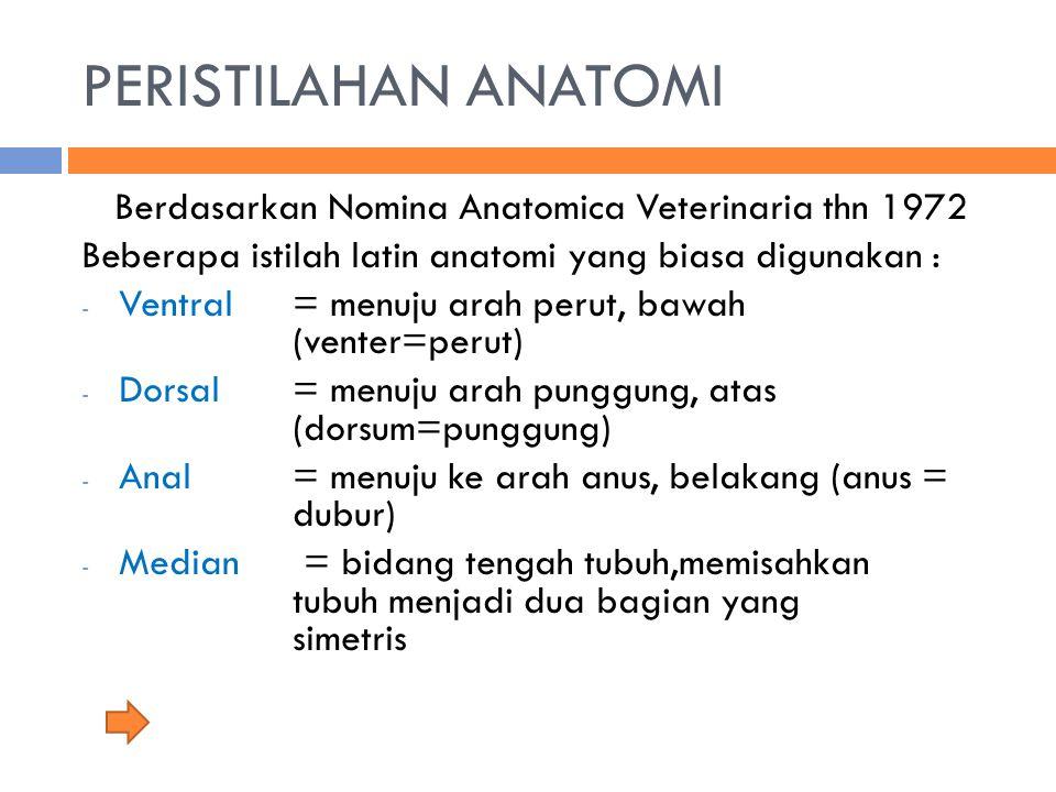 PERISTILAHAN ANATOMI Berdasarkan Nomina Anatomica Veterinaria thn 1972 Beberapa istilah latin anatomi yang biasa digunakan : - Ventral = menuju arah p