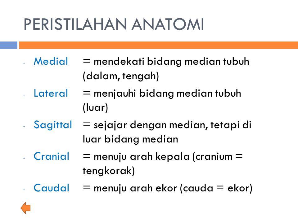 PERISTILAHAN ANATOMI - Medial = mendekati bidang median tubuh (dalam, tengah) - Lateral= menjauhi bidang median tubuh (luar) - Sagittal= sejajar denga