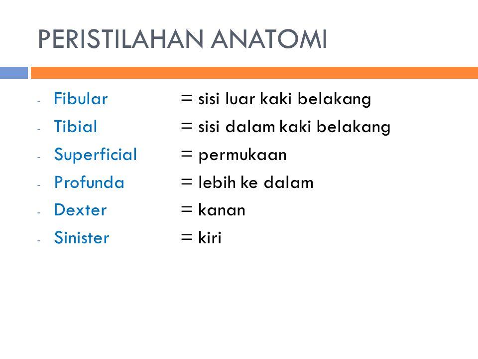 PERISTILAHAN ANATOMI - Fibular = sisi luar kaki belakang - Tibial= sisi dalam kaki belakang - Superficial = permukaan - Profunda= lebih ke dalam - Dex