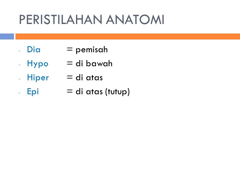 PERISTILAHAN ANATOMI - Dia= pemisah - Hypo= di bawah - Hiper= di atas - Epi= di atas (tutup)