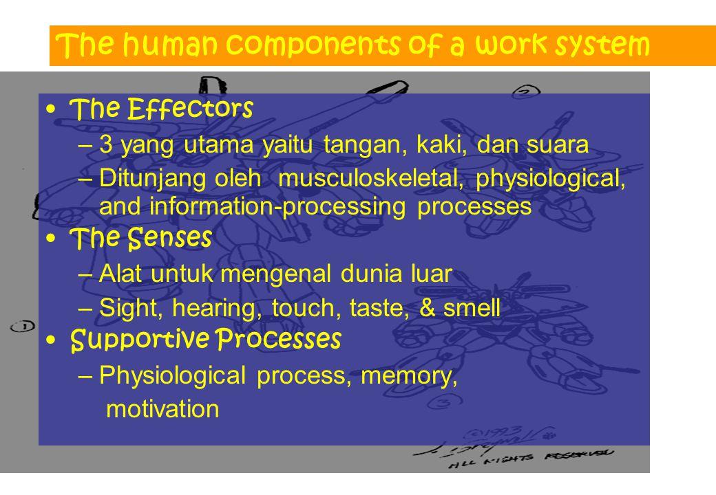 The human components of a work system The Effectors –3 yang utama yaitu tangan, kaki, dan suara –Ditunjang oleh musculoskeletal, physiological, and in
