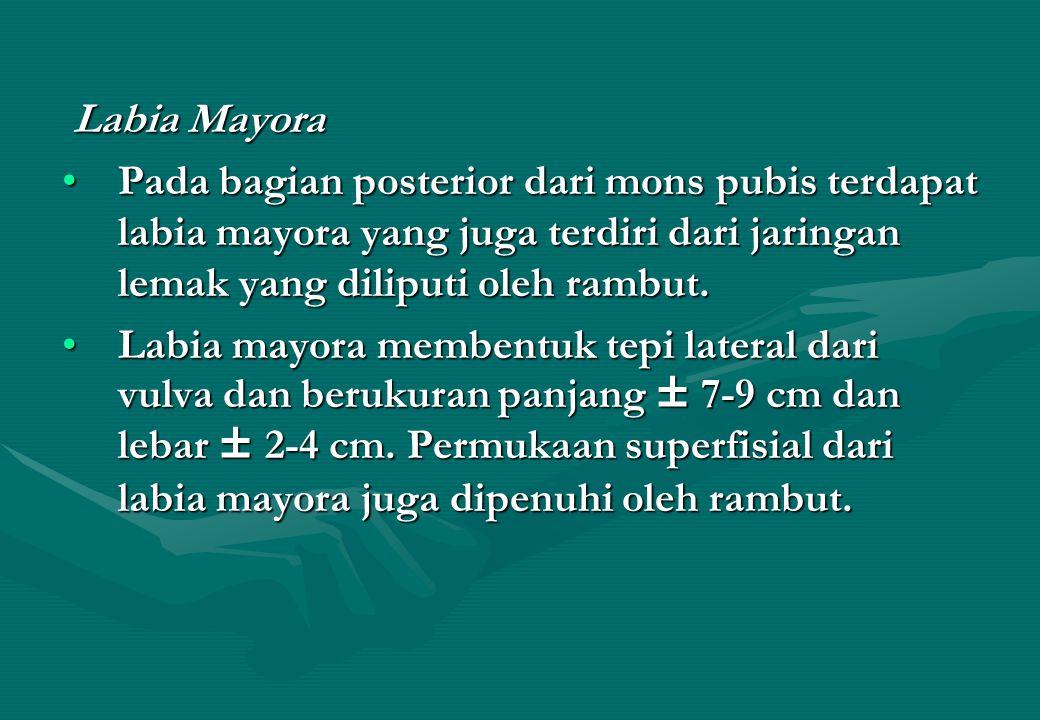 Labia Mayora Labia Mayora Pada bagian posterior dari mons pubis terdapat labia mayora yang juga terdiri dari jaringan lemak yang diliputi oleh rambut.Pada bagian posterior dari mons pubis terdapat labia mayora yang juga terdiri dari jaringan lemak yang diliputi oleh rambut.