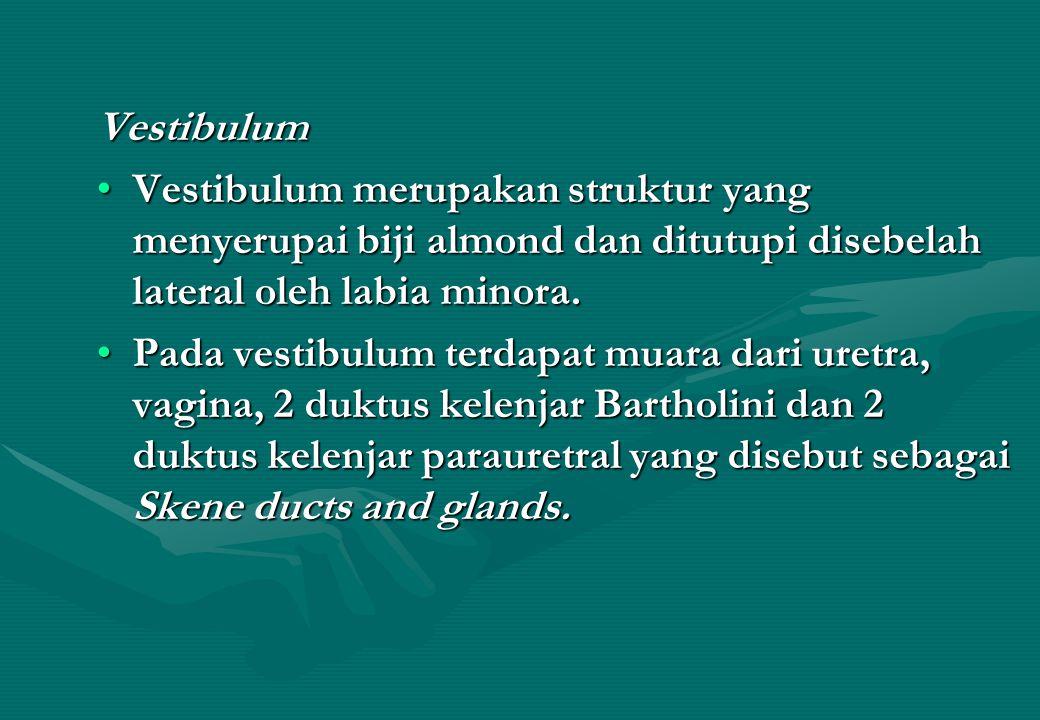 Vestibulum Vestibulum merupakan struktur yang menyerupai biji almond dan ditutupi disebelah lateral oleh labia minora.Vestibulum merupakan struktur ya
