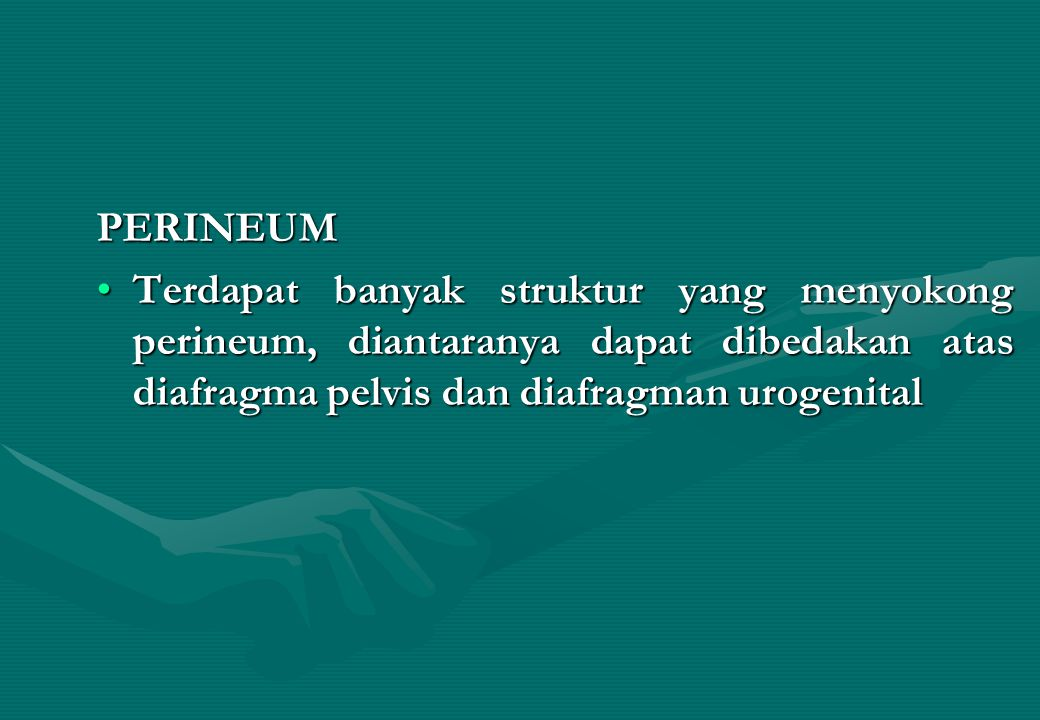 PERINEUM Terdapat banyak struktur yang menyokong perineum, diantaranya dapat dibedakan atas diafragma pelvis dan diafragman urogenitalTerdapat banyak struktur yang menyokong perineum, diantaranya dapat dibedakan atas diafragma pelvis dan diafragman urogenital