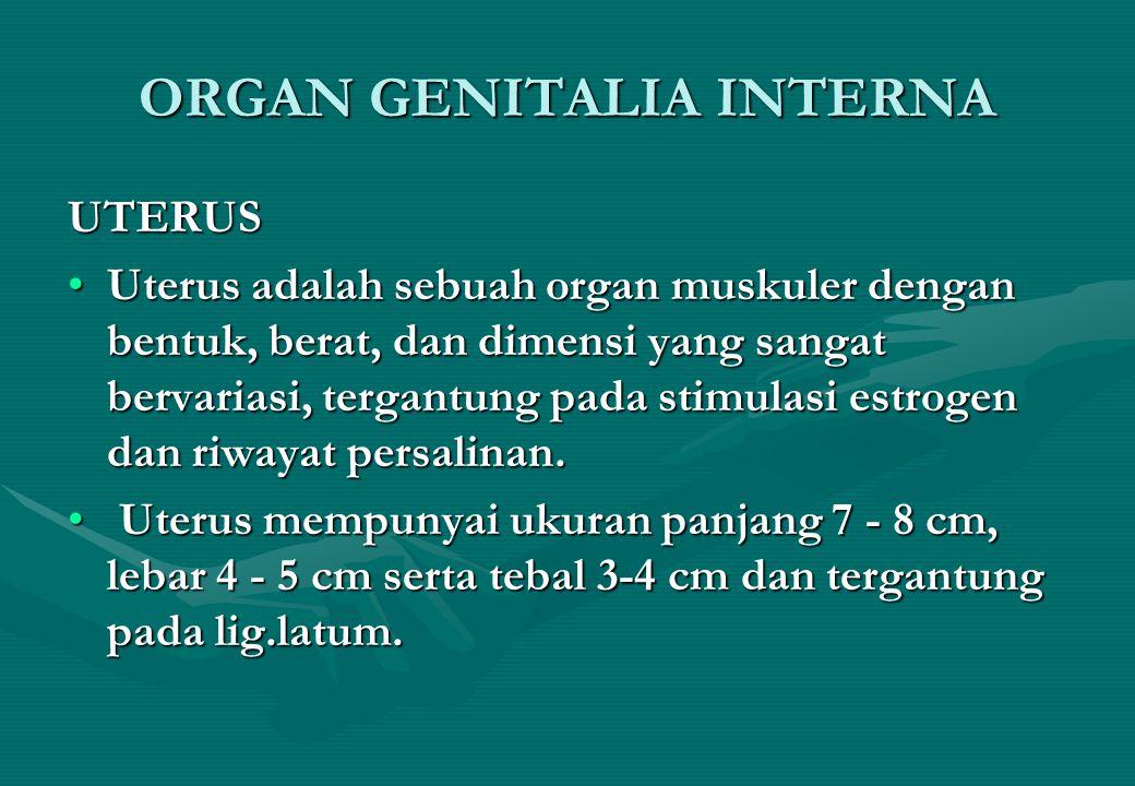 ORGAN GENITALIA INTERNA UTERUS Uterus adalah sebuah organ muskuler dengan bentuk, berat, dan dimensi yang sangat bervariasi, tergantung pada stimulasi