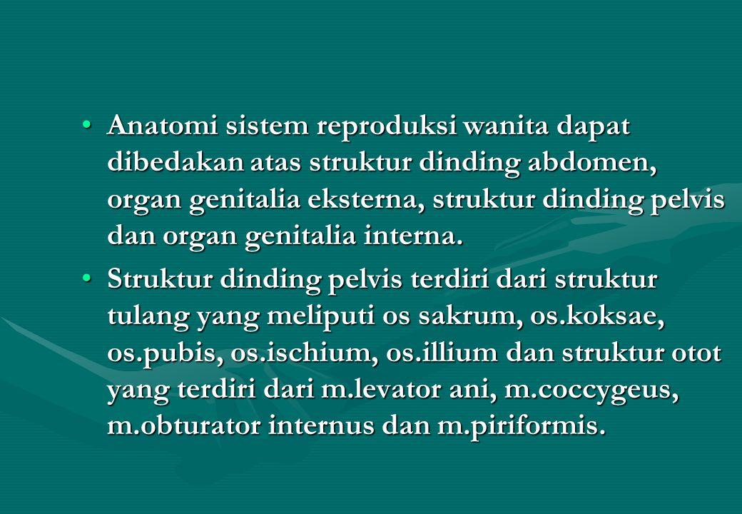 Anatomi sistem reproduksi wanita dapat dibedakan atas struktur dinding abdomen, organ genitalia eksterna, struktur dinding pelvis dan organ genitalia