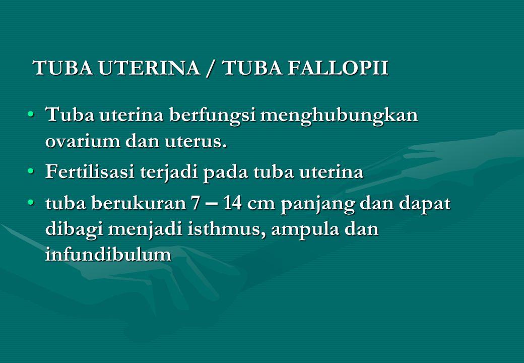 TUBA UTERINA / TUBA FALLOPII TUBA UTERINA / TUBA FALLOPII Tuba uterina berfungsi menghubungkan ovarium dan uterus.Tuba uterina berfungsi menghubungkan ovarium dan uterus.