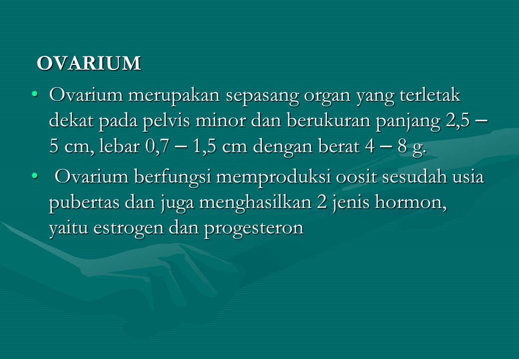 OVARIUM OVARIUM Ovarium merupakan sepasang organ yang terletak dekat pada pelvis minor dan berukuran panjang 2,5 – 5 cm, lebar 0,7 – 1,5 cm dengan ber