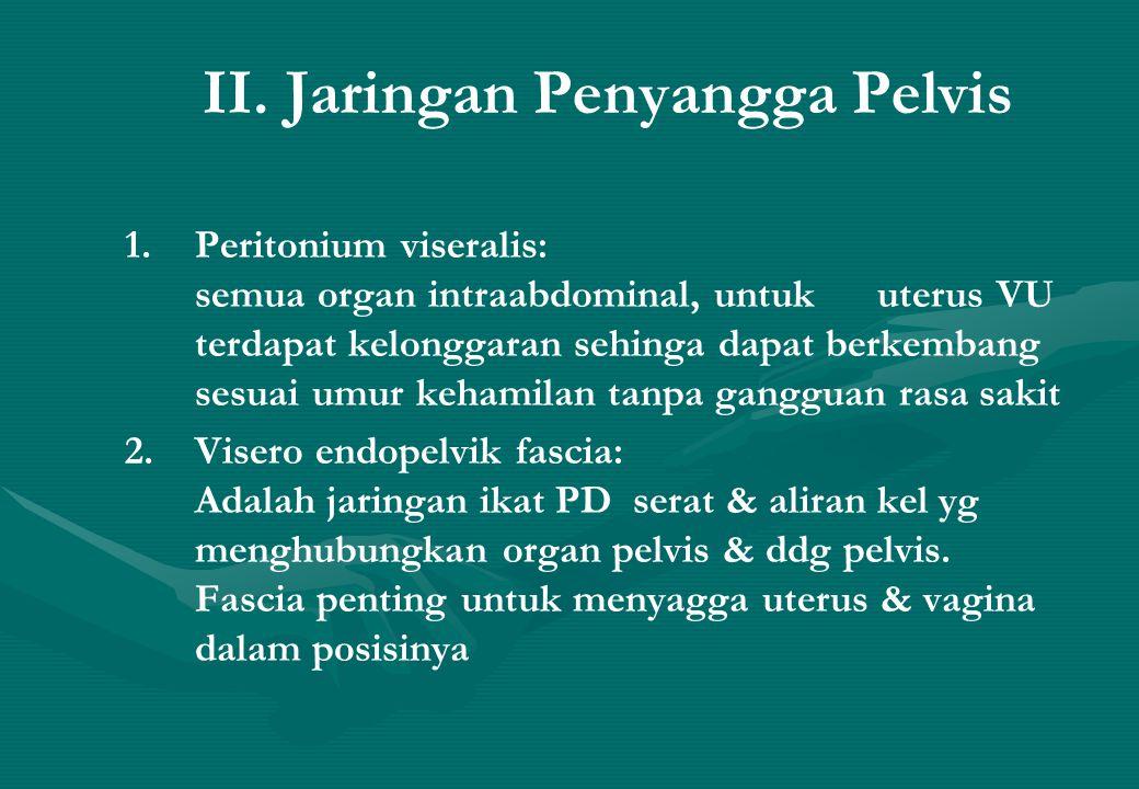 II. Jaringan Penyangga Pelvis 1. Peritonium viseralis: semua organ intraabdominal, untuk uterus VU terdapat kelonggaran sehinga dapat berkembang sesua