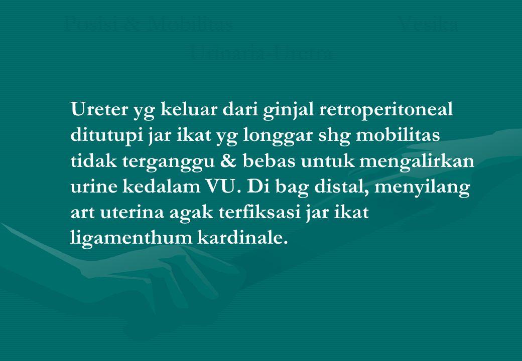 Posisi & Mobilitas Vesika Urinaria-Uretra Ureter yg keluar dari ginjal retroperitoneal ditutupi jar ikat yg longgar shg mobilitas tidak terganggu & be