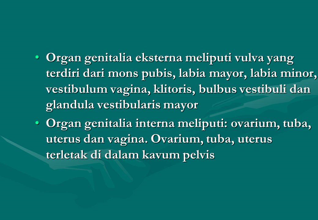 Organ genitalia eksterna meliputi vulva yang terdiri dari mons pubis, labia mayor, labia minor, vestibulum vagina, klitoris, bulbus vestibuli dan glandula vestibularis mayorOrgan genitalia eksterna meliputi vulva yang terdiri dari mons pubis, labia mayor, labia minor, vestibulum vagina, klitoris, bulbus vestibuli dan glandula vestibularis mayor Organ genitalia interna meliputi: ovarium, tuba, uterus dan vagina.