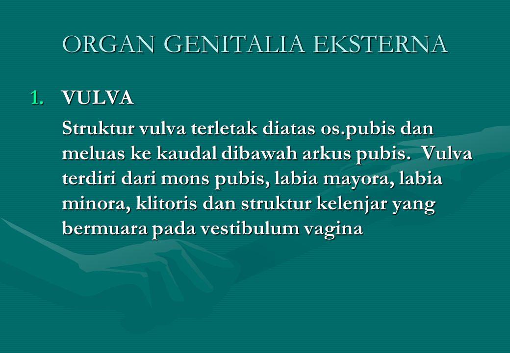ORGAN GENITALIA EKSTERNA 1.VULVA Struktur vulva terletak diatas os.pubis dan meluas ke kaudal dibawah arkus pubis. Vulva terdiri dari mons pubis, labi