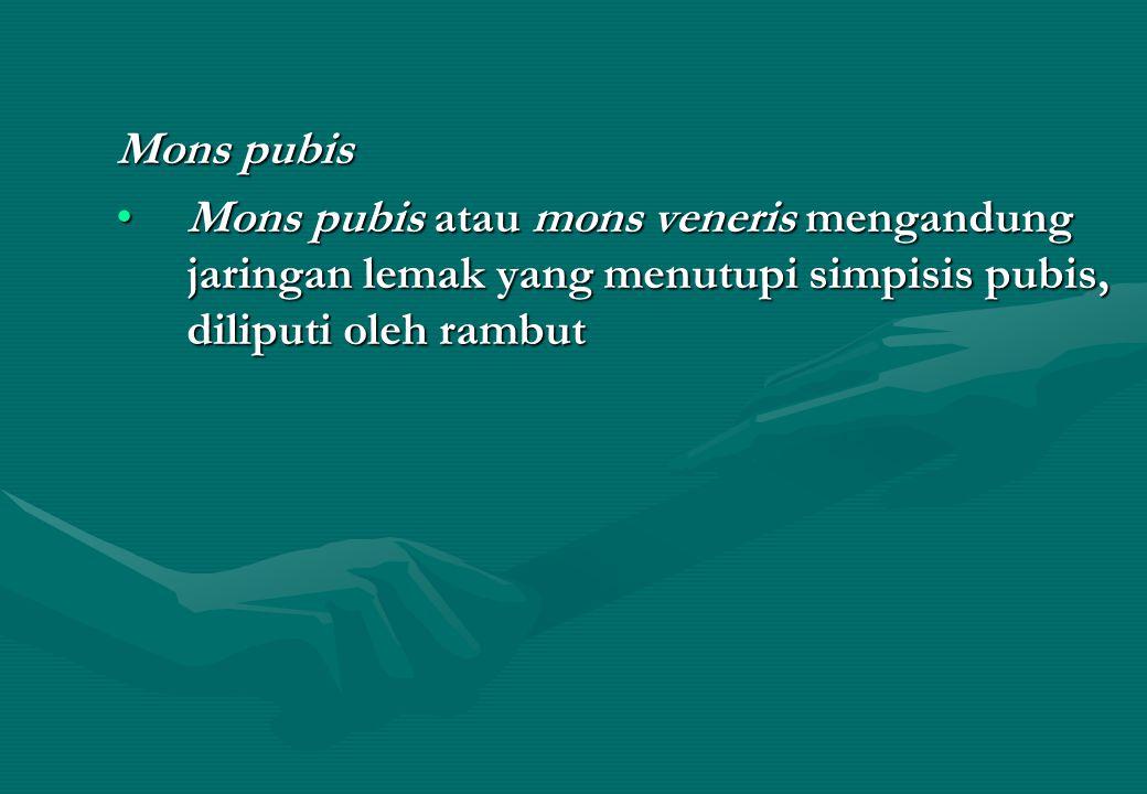 Mons pubis Mons pubis atau mons veneris mengandung jaringan lemak yang menutupi simpisis pubis, diliputi oleh rambutMons pubis atau mons veneris mengandung jaringan lemak yang menutupi simpisis pubis, diliputi oleh rambut