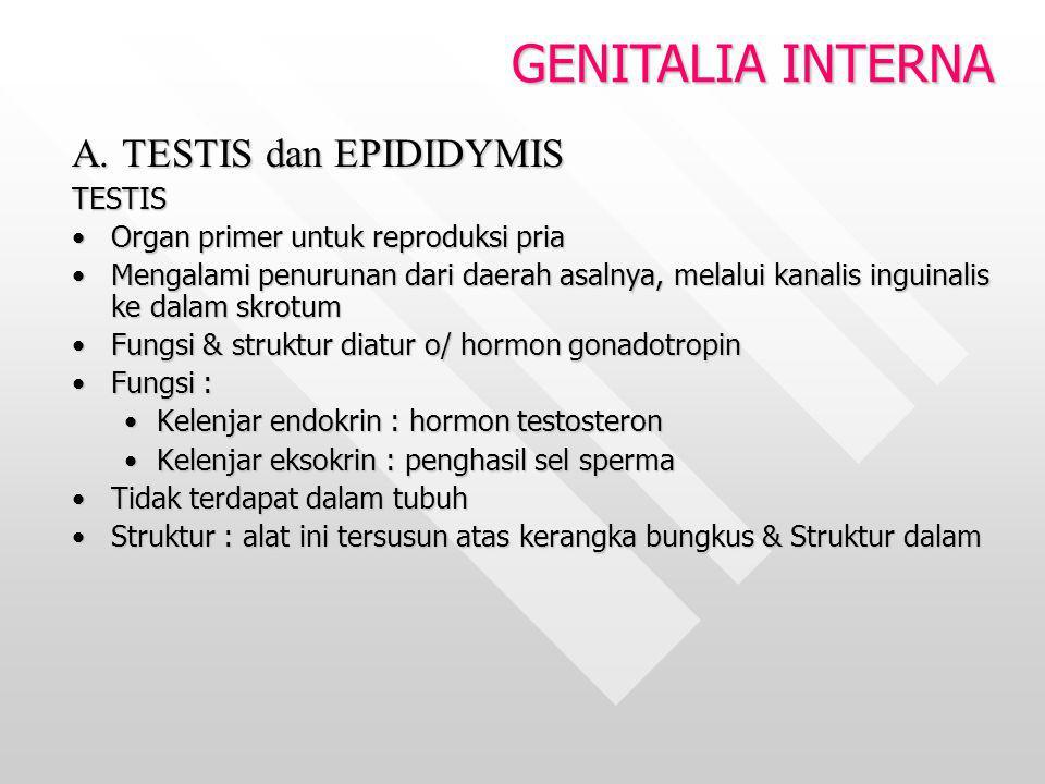 A. TESTIS dan EPIDIDYMIS TESTIS Organ primer untuk reproduksi priaOrgan primer untuk reproduksi pria Mengalami penurunan dari daerah asalnya, melalui