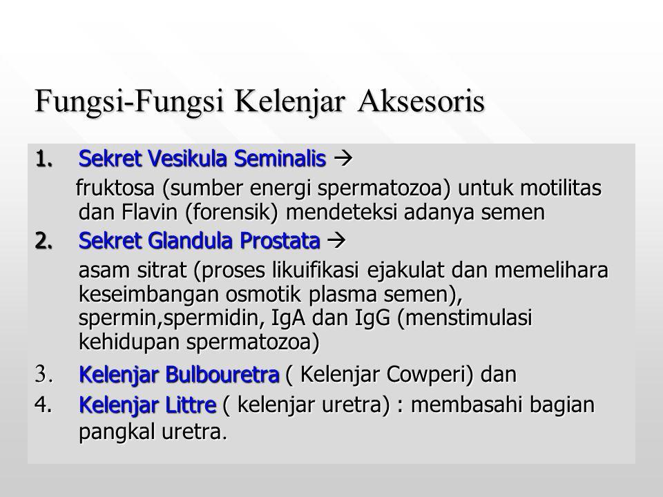 Fungsi-Fungsi Kelenjar Aksesoris 1.Sekret Vesikula Seminalis  fruktosa (sumber energi spermatozoa) untuk motilitas dan Flavin (forensik) mendeteksi a