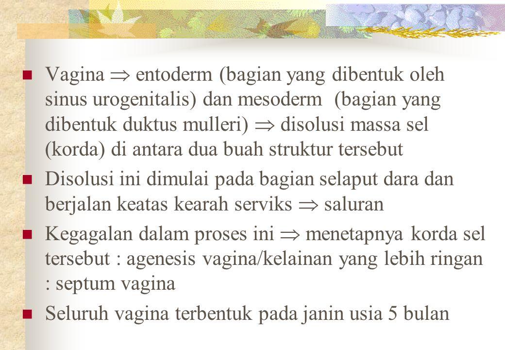 Vagina  entoderm (bagian yang dibentuk oleh sinus urogenitalis) dan mesoderm (bagian yang dibentuk duktus mulleri)  disolusi massa sel (korda) di antara dua buah struktur tersebut Disolusi ini dimulai pada bagian selaput dara dan berjalan keatas kearah serviks  saluran Kegagalan dalam proses ini  menetapnya korda sel tersebut : agenesis vagina/kelainan yang lebih ringan : septum vagina Seluruh vagina terbentuk pada janin usia 5 bulan