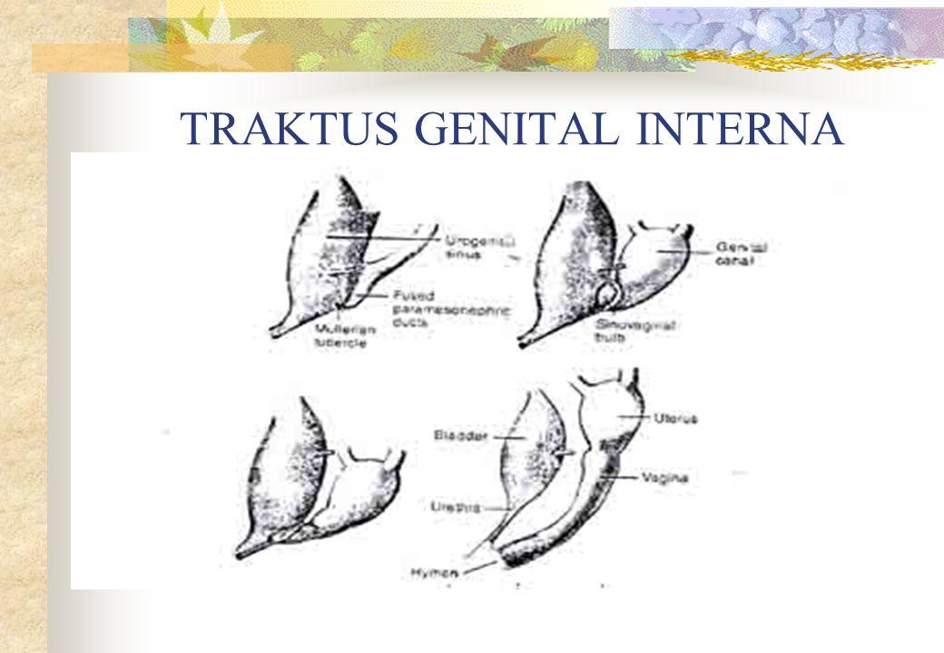 TRAKTUS GENITAL INTERNA