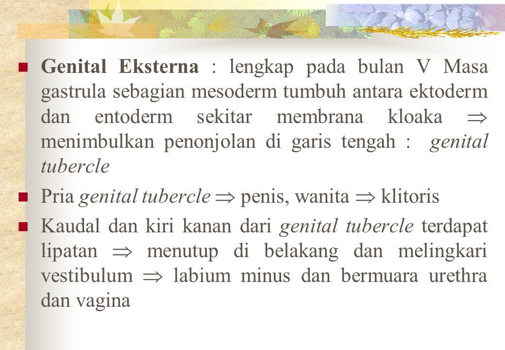 Genital Eksterna : lengkap pada bulan V Masa gastrula sebagian mesoderm tumbuh antara ektoderm dan entoderm sekitar membrana kloaka  menimbulkan peno