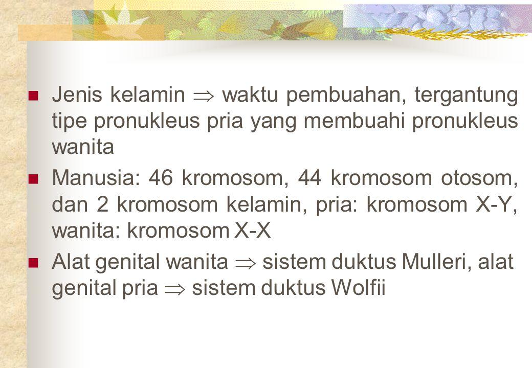 Jenis kelamin  waktu pembuahan, tergantung tipe pronukleus pria yang membuahi pronukleus wanita Manusia: 46 kromosom, 44 kromosom otosom, dan 2 kromo