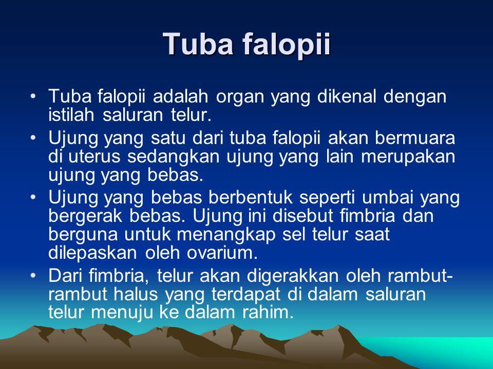 Tuba falopii Tuba falopii adalah organ yang dikenal dengan istilah saluran telur. Ujung yang satu dari tuba falopii akan bermuara di uterus sedangkan
