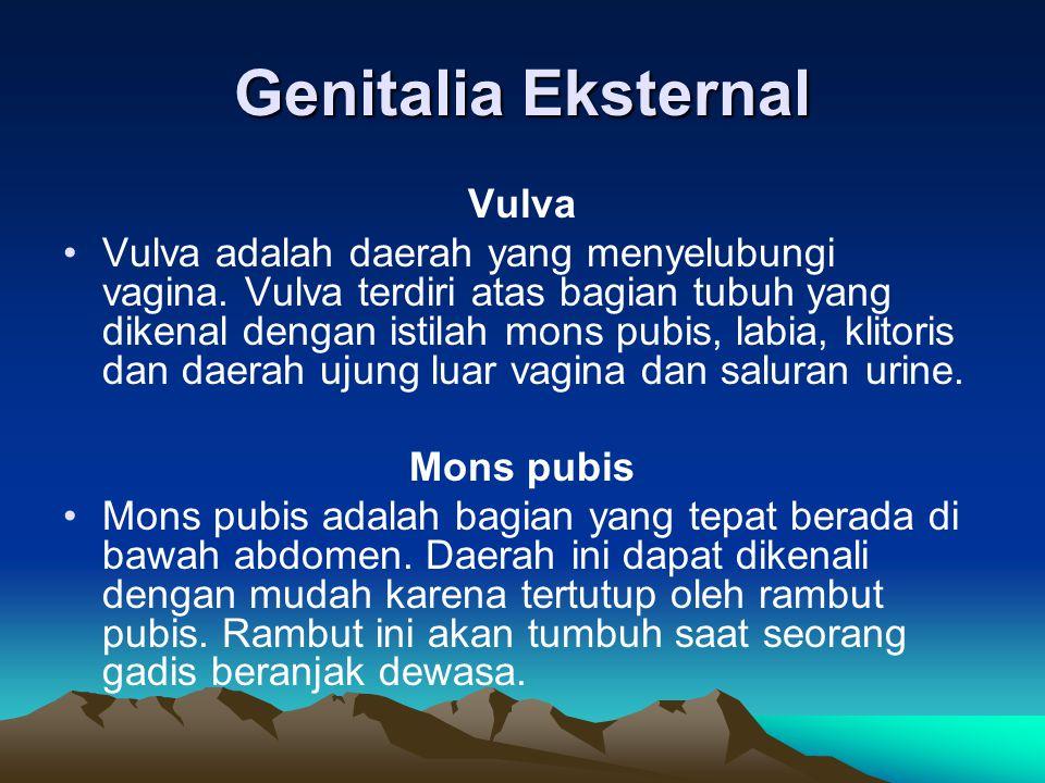 Genitalia Eksternal Vulva Vulva adalah daerah yang menyelubungi vagina. Vulva terdiri atas bagian tubuh yang dikenal dengan istilah mons pubis, labia,