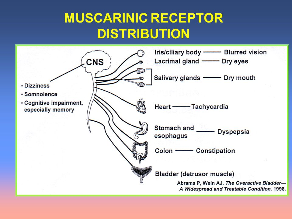 MUSCARINIC RECEPTOR DISTRIBUTION