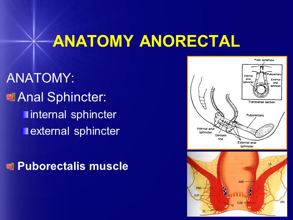 ANATOMY ANORECTAL ANATOMY: Anal Sphincter: internal sphincter external sphincter Puborectalis muscle