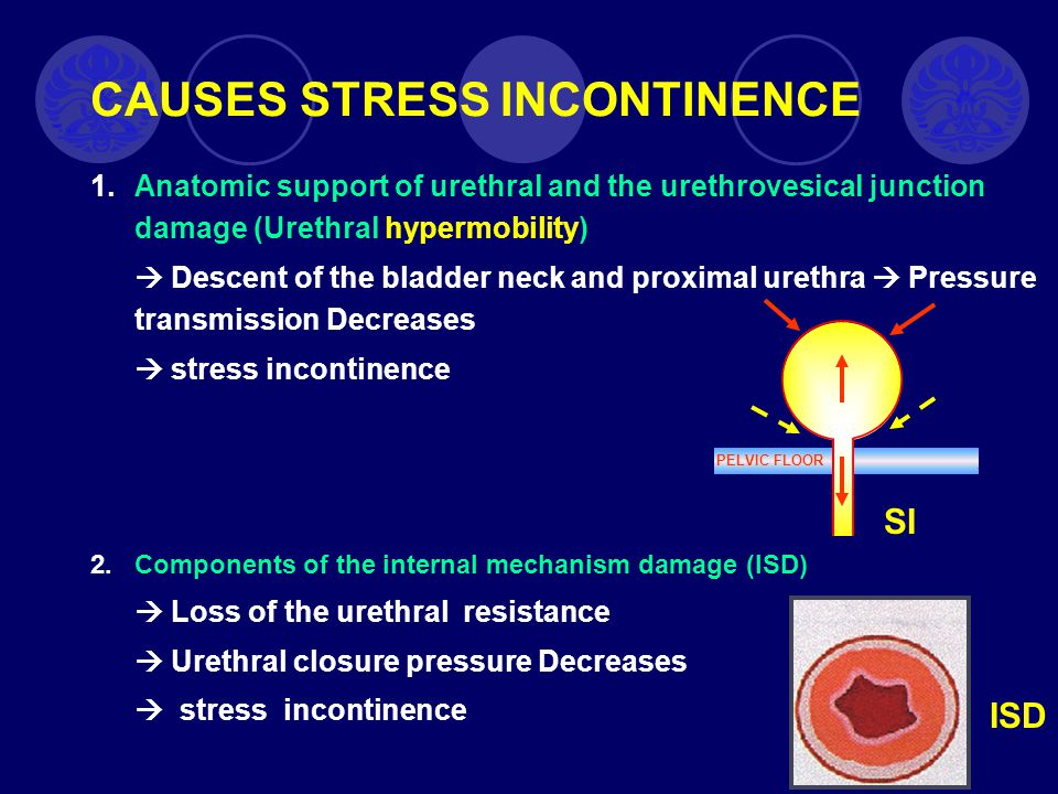 c.Obat yang bekerja pada otot polos Mempengaruhi kerja otot otot detrusor.