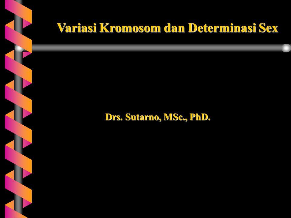 Drs. Sutarno, MSc., PhD. Variasi Kromosom dan Determinasi Sex