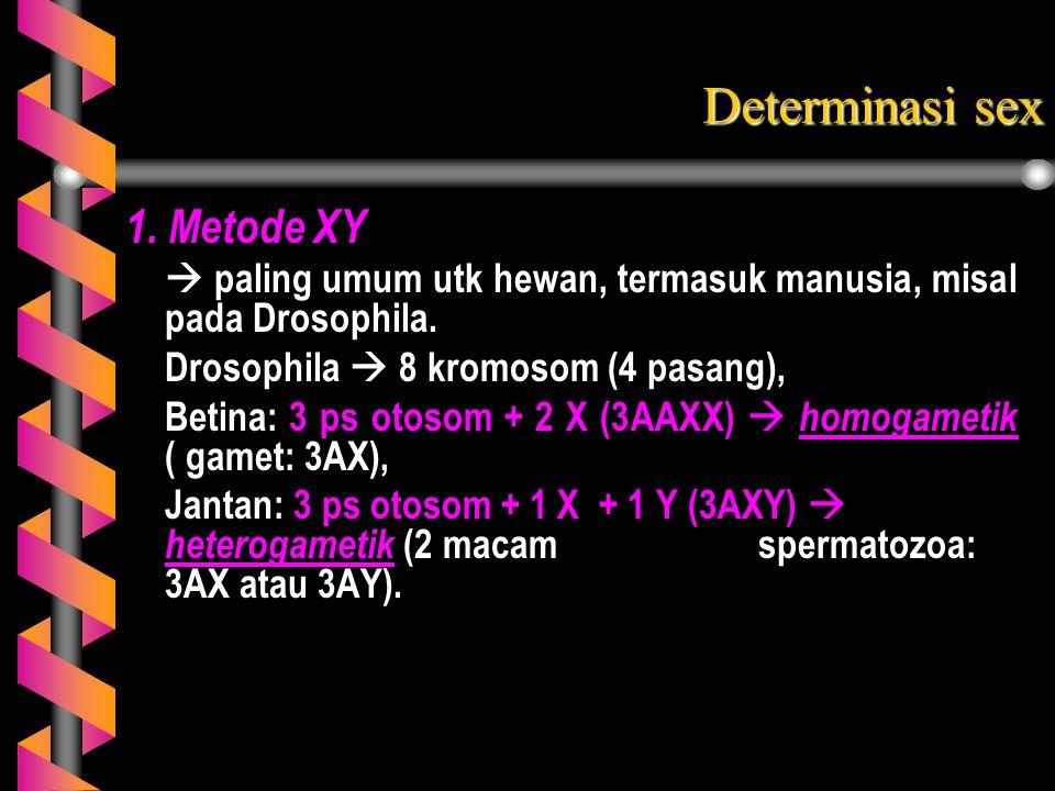 1. Metode XY  paling umum utk hewan, termasuk manusia, misal pada Drosophila. Drosophila  8 kromosom (4 pasang), Betina: 3 ps otosom + 2 X (3AAXX) 