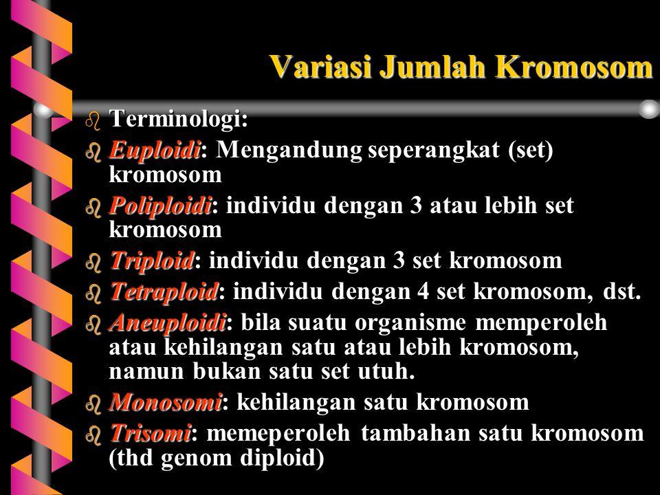 Variasi Jumlah Kromosom b Terminologi: b Euploidi:Mengandung seperangkat (set) kromosom b Poliploidi: individu dengan 3 atau lebih set kromosom b Trip