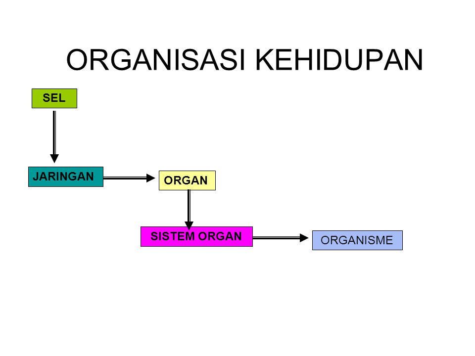 SEL JARINGAN ORGAN SISTEM ORGAN ORGANISME
