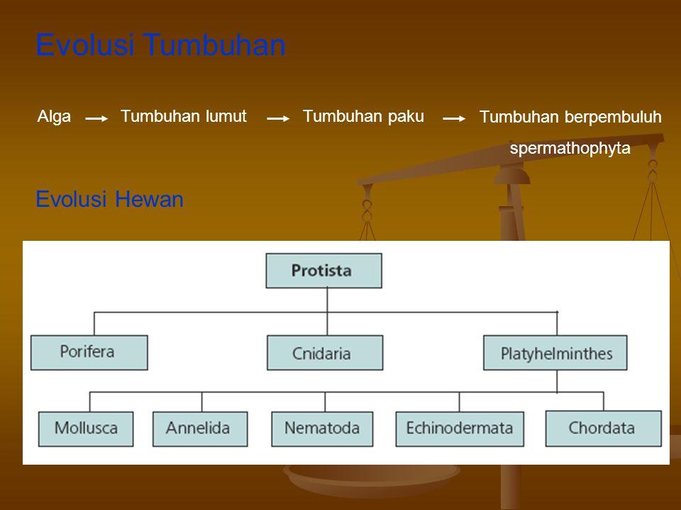 Evolusi Tumbuhan AlgaTumbuhan lumutTumbuhan paku Tumbuhan berpembuluh spermathophyta Evolusi Hewan