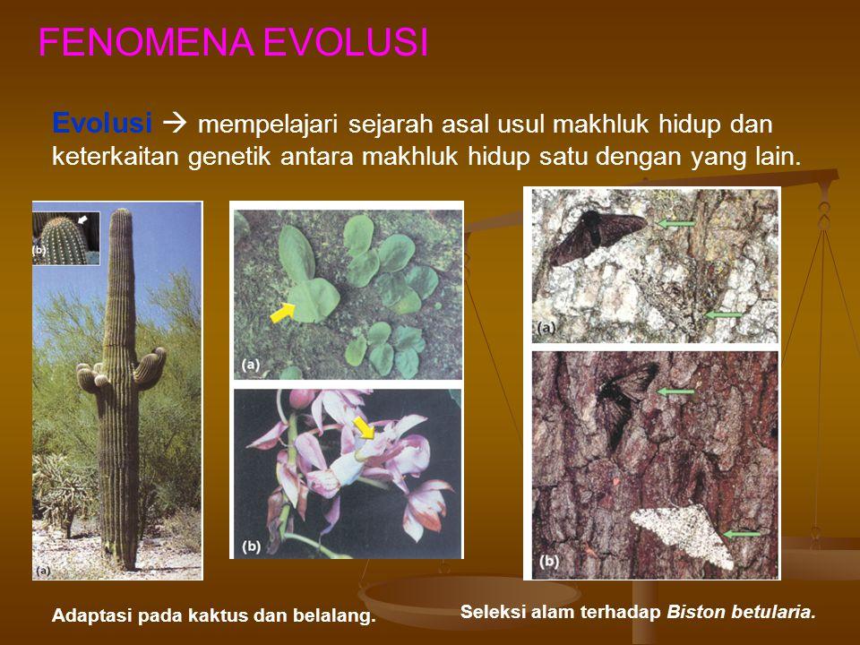 FENOMENA EVOLUSI Evolusi  mempelajari sejarah asal usul makhluk hidup dan keterkaitan genetik antara makhluk hidup satu dengan yang lain.