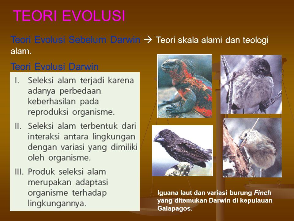 TEORI EVOLUSI Teori Evolusi Sebelum Darwin  Teori skala alami dan teologi alam.